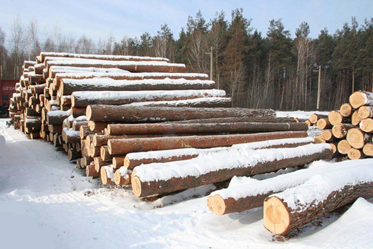 Власти Томской области через суд хотят расторгнуть договор с арендатором леса