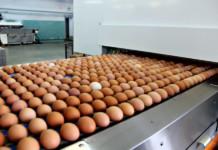 Над государственной птицефабрикой «Бархатовская» вновь нависла угроза банкротства