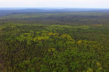 Вокруг Иркутска будет создан лесопарковый зеленый пояс площадью 190 тыс гектаров