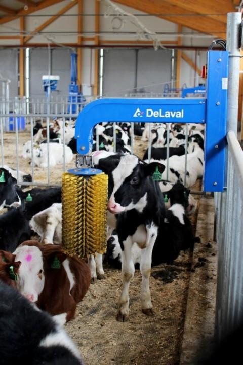 Россельхозбанк и «МолСиб» разработали меры поддержки предприятий молочной отрасли