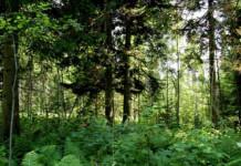 В Алтайском крае появится первый национальный парк