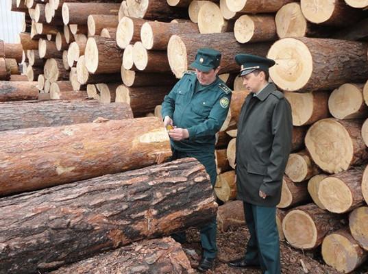 Директор иркутской фирмы не вернул 135 млн рублей за вывезенный лес в Китай Иркутской таможней против предпринимателя возбуждено три уголовных дела по фактам преступлений, связанных с невозвратом 135 млн рублей за вывезенные в Китай пиломатериалы