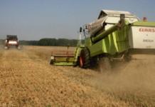 Фермеры Новосибирской области получат дополнительное финансирование из федерального бюджета