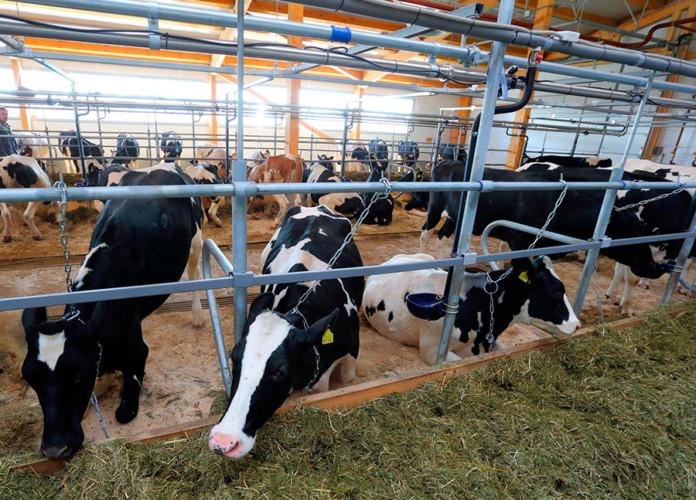 Фермеры Томской области получат 60 млн рублей на развитие хозяйств