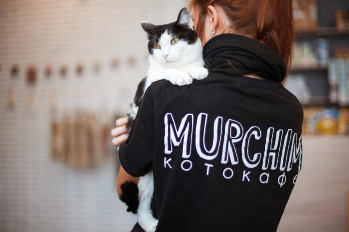 Котокафе Murchim в Академгородке закрывается