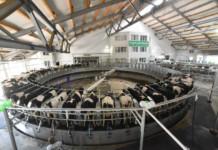 В Новосибирской области запущен новый животноводческий комплекс мощностью 62 тыс тонн молока в год