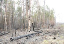 Правительство Иркутской области настаивает на законности рубки леса в заказнике «Туколонь»