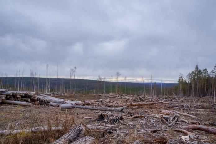 Министра лесного комплекса Иркутской области Сергея Шеверду оставили под стражей