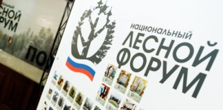 В сентябре 2019 года Красноярск станет лесным центром в российском масштабе