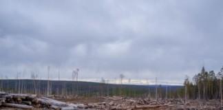 Суд признал санитарные рубки в иркутском заказнике «Туколонь» незаконными