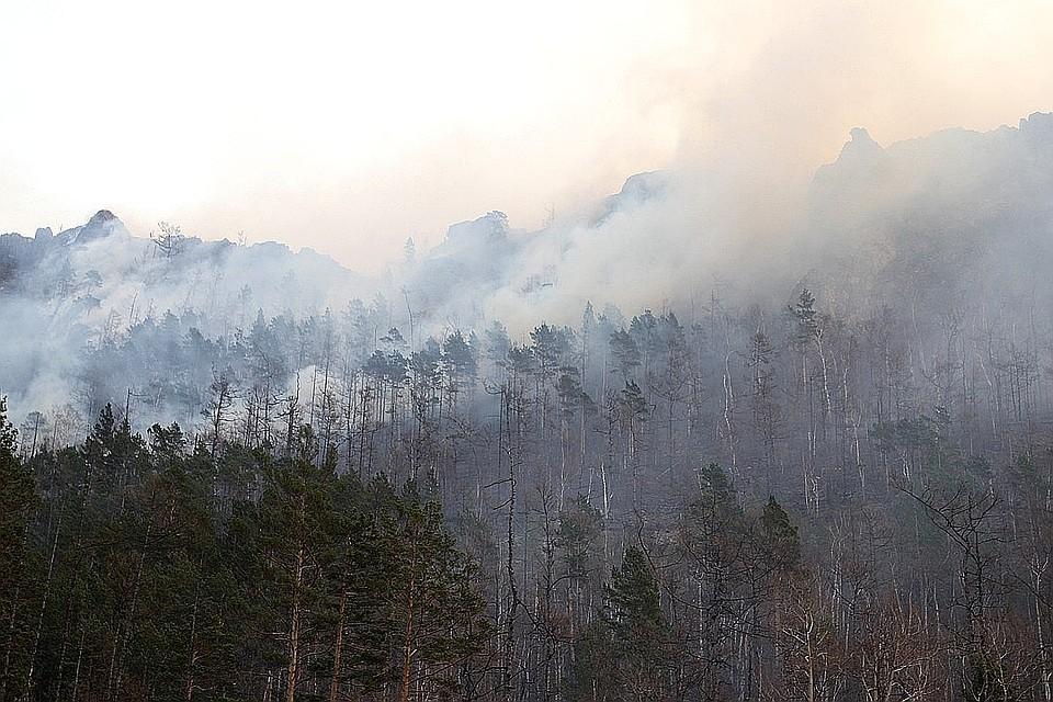 Министерство лесного хозяйства Красноярского края попало под уголовное дело в связи с бушующими пожарами в регионе