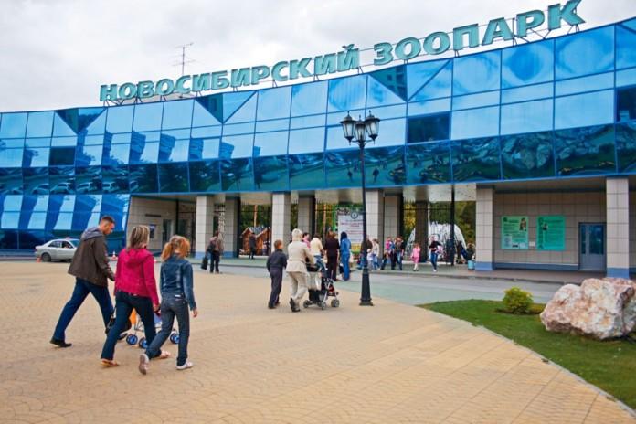 Обновленная версия мобильного приложения для Новосибирского зоопарка поможет купить билеты онлайн