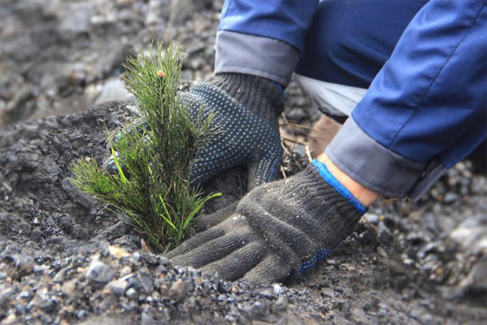 Миниатюра для: Угольщики Кузбасса восстанавливают нарушенные земли