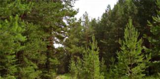Развернута масштабная системная работа по охране и развитию городских лесов