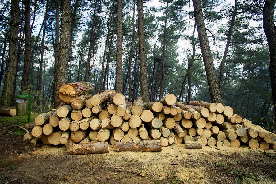 Нелегальный оборот древесины