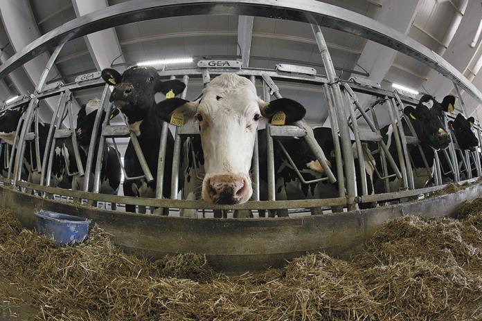 Миниатюра для: Недвижимое преимущество: новосибирские аграрии ждут налоговых преференций