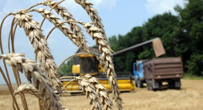 Миниатюра для: На экспорт отправлено более 350 тысяч тонн продукции АПК Новосибирской области