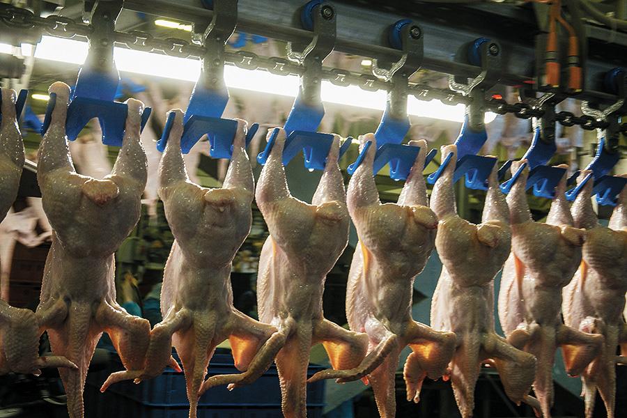 Почему дорожает курица в Сибири, и в каком состоянии находятся региональные птицефабрики? - Фото
