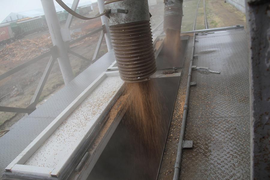 Объёмы погрузки зерна в Новосибирской области