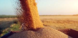 Россельхозбанк прогнозирует увеличение доли России на мировом рынке продовольствия