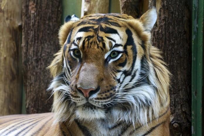 Миниатюра для: Новосибирский зоопарк получит 22 миллиона из областного бюджета