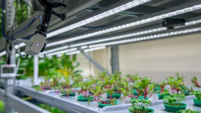 Миниатюра для: Новосибирская компания iFarm начинает строительство второй и третьей очередей вертикальной фермы в Москве