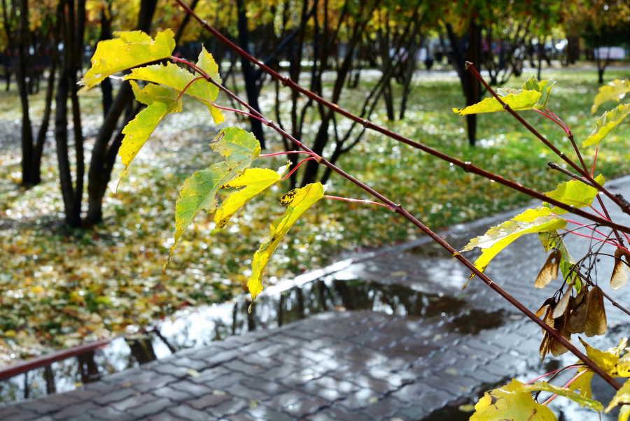Погода в Новосибирске