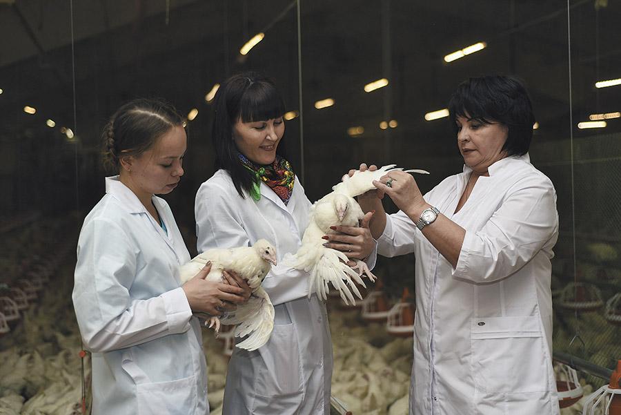 Птицефабрика «Октябрьская» ждет 40-процентного роста экспорта - Фотография