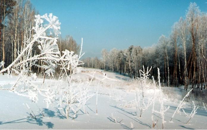 Миниатюра для: Власти Новосибирска возвращают остров «Медвежий»