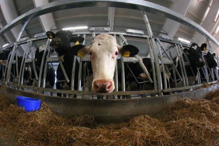Миниатюра для: Участники рынка назвали катастрофической ситуацию с переработкой молока в Новосибирской области