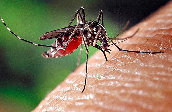 Комар лихорадка Мальдивы