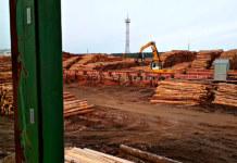 Инновации в лесной промышленности