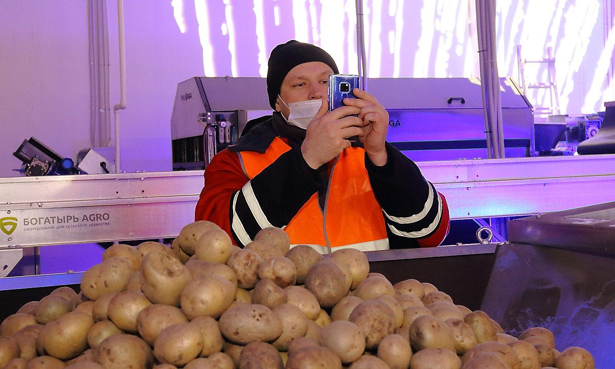РосАгроМаркет картошка