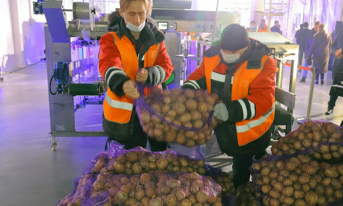 РосАгроМаркет разгрузка картофеля
