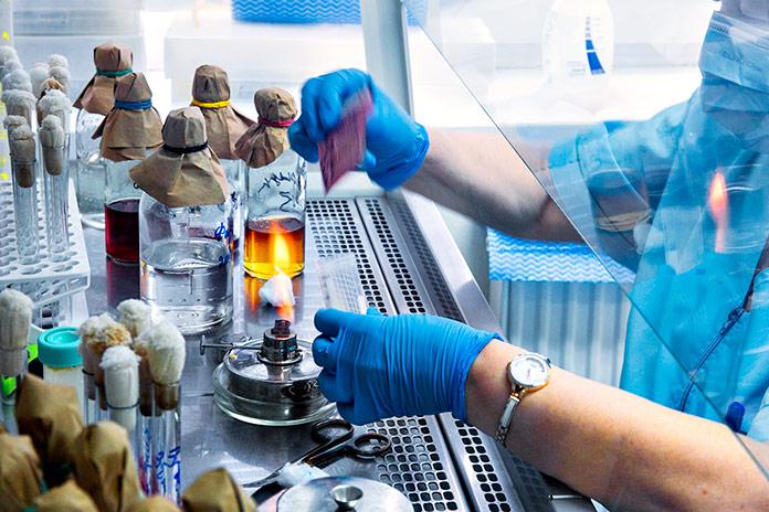 «Вектор» исследует новый штамм коронавируса