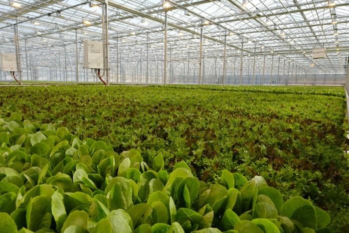 Миниатюра для: Губернатор Андрей Травников открыл новый тепличный комплекс в Новосибирском районе