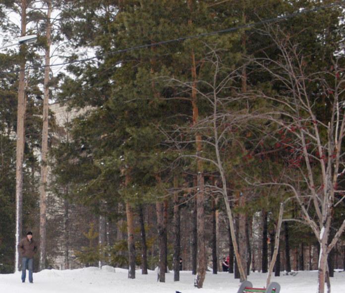 Миниатюра для: Новосибирцы выйдут на пикет в защиту леса в районе бывшего лагеря «Юный медик»