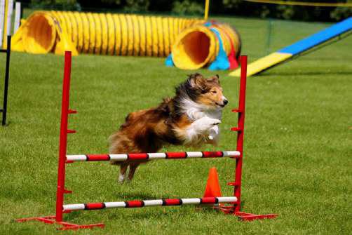 оборудованная площадка для дрессировки собак