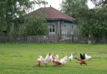 Село, деревня