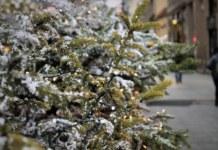 Замначальника отдела полиции в Новосибирской области пойдет в суд за взятку в виде новогодней елки