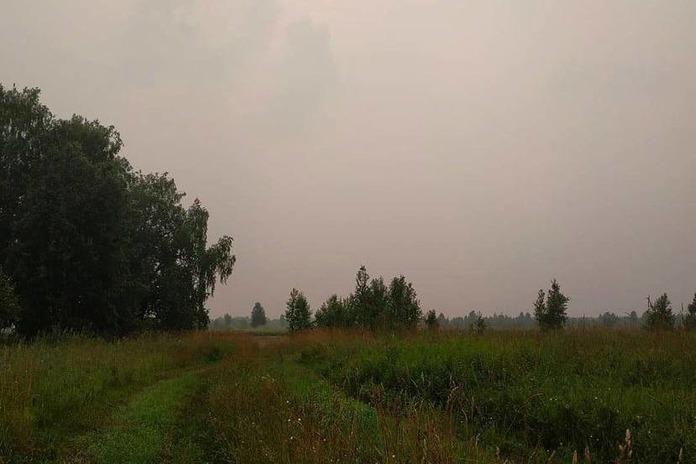 Жаркая погода вернется в Новосибирскую область