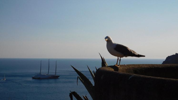 яхта чайка италия
