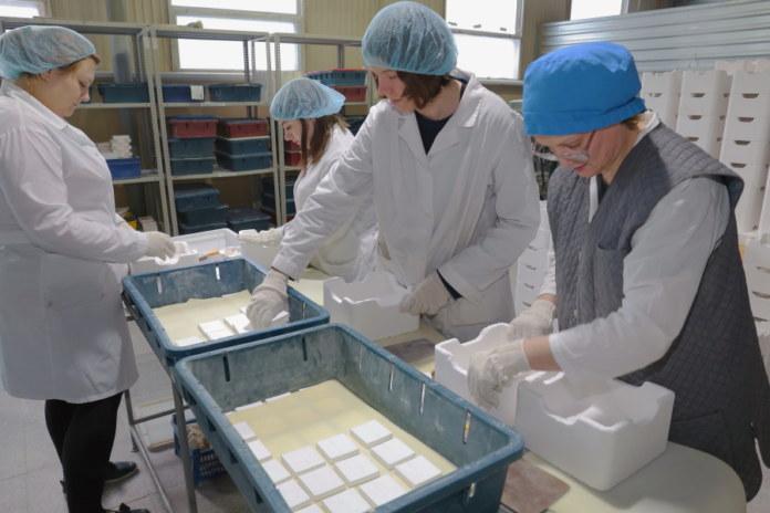 Миниатюра для: Налоговая потребовала признать банкротом новосибирский завод нанокерамики