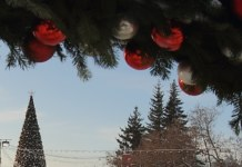 Полицейский взял взятку новогодней елкой в Новосибирске