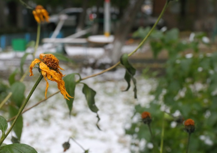 Прогноз погоды на зиму в Сибири