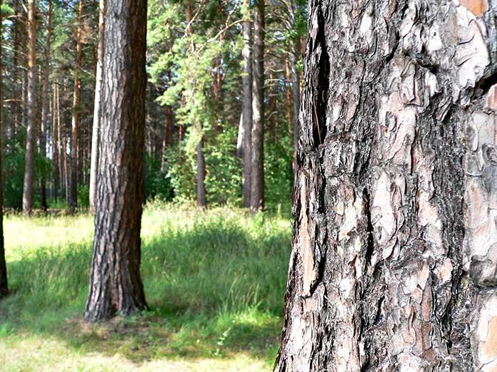 В Новосибирской области началось обсуждение о создании особо охраняемой природной зоны в Караканском бору