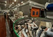 Компания «Рыбный хит» в Новосибирской области увеличила выработку в 1,5 раза