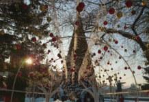 В Новосибирске объявили конкурс на поставку новогодних гирлянд