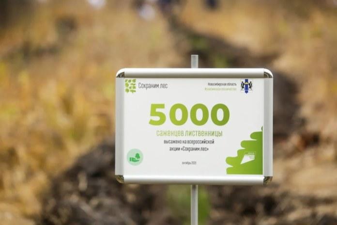 Миниатюра для: Волонтеры Сбера помогли высадить 5 тыс. саженцев лиственницы в Новосибирской области